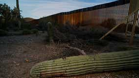 Damage from border wall: blown-up mountains, toppled cactus
