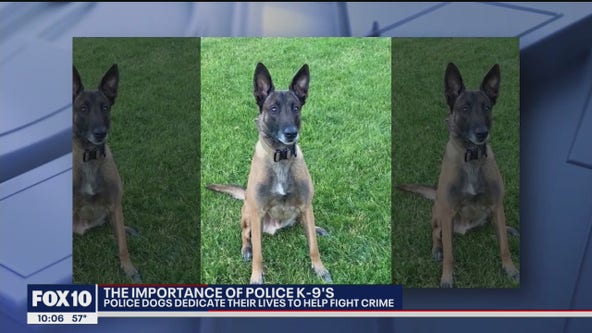 Police dog trainer talks about the importance of the dog's work
