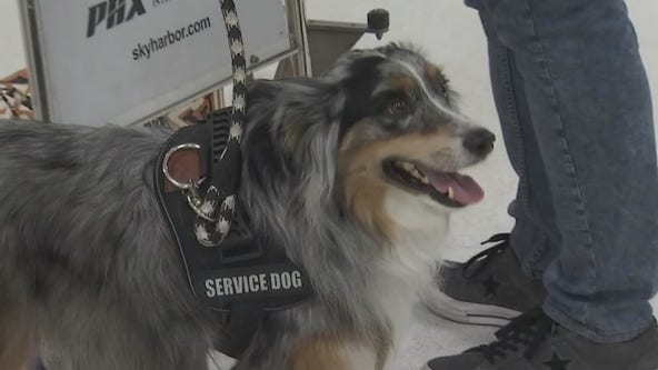 Department of Transportation tightens rules for service animals on planes