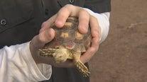 Valley teen raising money to build shelters for tortoises