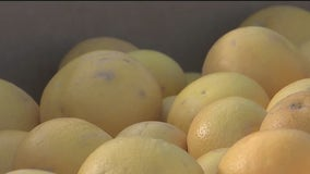 St. Mary's Food Bank will take your extra citrus fruits