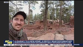 Bearizona releases documentary about orphaned grizzly bear cubs