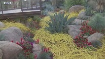 Water-inspired exhibit opens at Desert Botanical Garden
