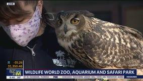 Critter Corner: Eurasian Eagle Owl