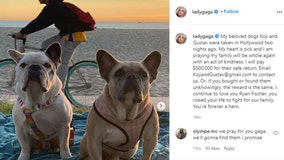 'My heart is sick': Lady Gaga pleads for the safe return of her French bulldogs; offers $500K reward