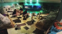 Odysea Aquarium offering virtual animal encounters