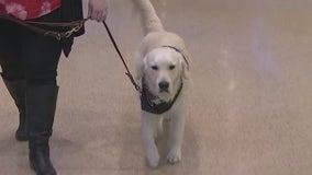 Meet Bravery: Arizona Coyotes adopts new service dog