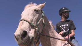 Scottsdale farm using horse therapy to help kids with cerebral palsy