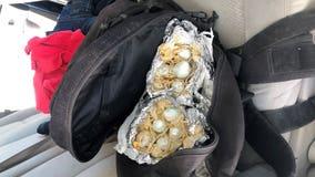 Border Patrol K-9 finds fentanyl stuffed in breakfast burritos near Yuma