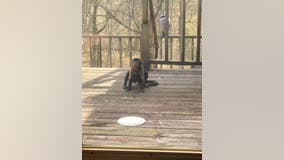 'It was very surreal': Family surprised when baby monkey shows up on Kentucky front porch, stays for days