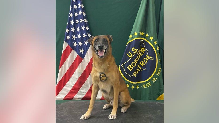 Retired Border Patrol K-9 Officer, Kirpy. Courtesy of US Customs and Border Protection