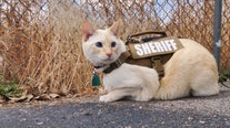 'No need for K-9s': New Mexico sheriff's department announces 'feline division' on April Fools' Day