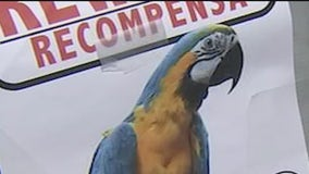 Maya the Macaw missing after Apache Junction house fire