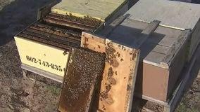 Behind the scenes at an Arizona honey farm