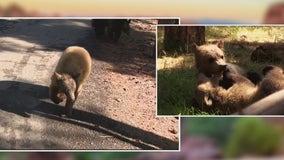 Arizona Adventures: Bearizona Wildlife Park