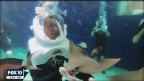 Guests now welcome to return to SeaTrek at Odysea Aquarium
