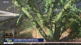 Spending Arbor Day at Mesa Urban Garden