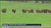 45,000+ people apply to Grand Canyon bison hunt