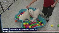 Finding the perfect pet match