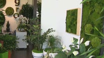 Living plant walls for offices, businesses