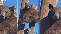 Bear winds up on power poles in southern Arizona