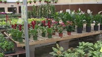 Phoenix nursery offers free plants for teachers, healthcare workers