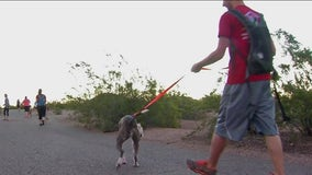 Arizona Humane Society shares tips to keep pets cool this summer
