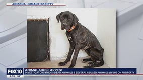 Phoenix officials find 15 dead animals, others severely abused in home