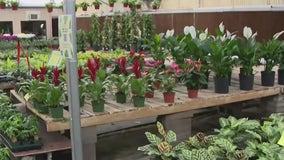 Phoenix nursery offers free plants for teachers, healthcare workers