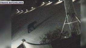 Black bear sighted in North Phoenix neighborhoods