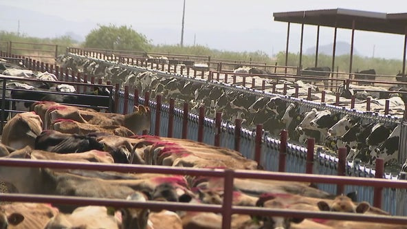 Arizona farm aims to lead change in climate battle by turning animal waste into biogas