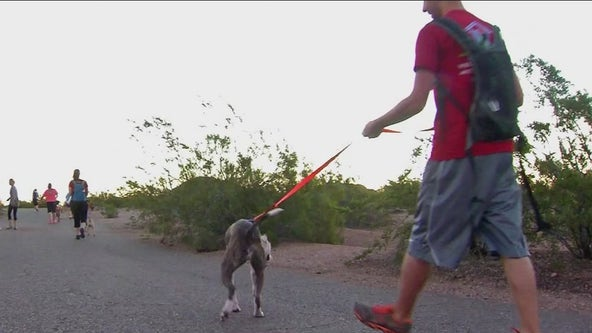 Arizonans urged to keep pets away from summer heat