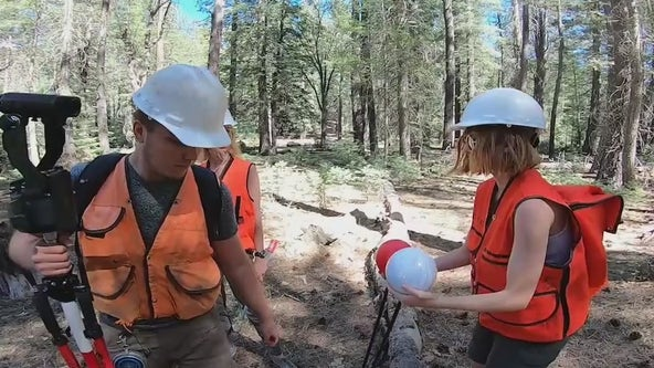 NAU students determined to return Arizona forest to its former glory, one tree at a time