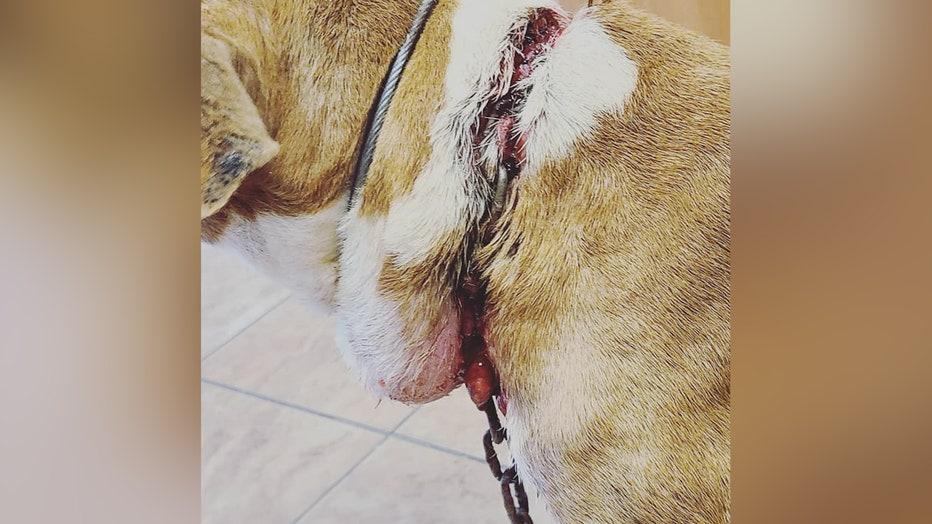 Abandoned-dog-injury1.jpg