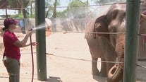 How the Phoenix Zoo keeps the animals cool during a hot summer day