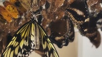 Behind the scenes at Butterfly Wonderland in Scottsdale