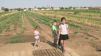 Pick your own produce at Tolmachoff Farms