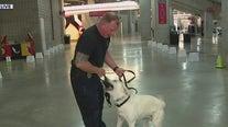Police dog training at State Farm Stadium