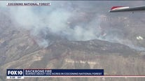 Backbone Fire burns 1,200 acres in Coconino National Forest