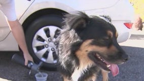Dogs banned from Phoenix trails when temps reach 100°