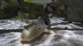 Tempe aquarium welcomes 4 baby sharks