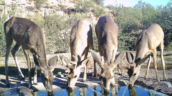 Arizona Game and Fish: Lifesaving water delivered to wildlife expecting to reach 3 million gallons