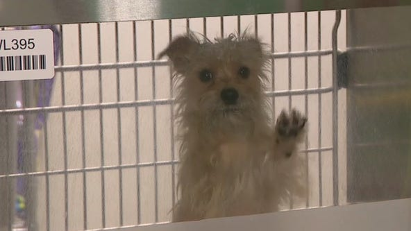 Maricopa County animal shelter at critical capacity, holding free adoption event