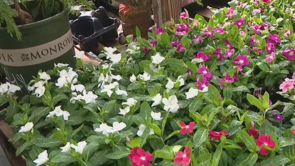 Caring for plants in extreme heat