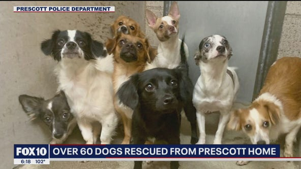 Over 60 dogs rescued from Prescott home