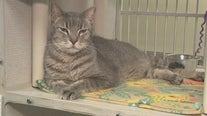 Arizona animal welfare organizations aim to keep pets at home