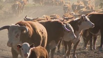 Over a century later, few things have changed at large Northern Arizona ranch