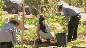 Valley nonprofit uses South Phoenix community garden to promote health, practical life skills