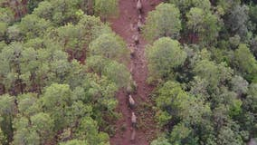 China's migrating elephants spotted once more on the move