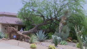 Cleanup underway after parts of Arizona pounded by 'ping pong ball' sized hail, thunderstorms